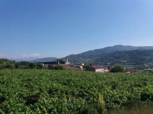 Montecchia 11 giugno