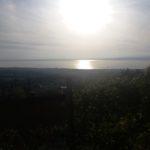 Salcus dai vigneti e olivi del Garda alle golene dell'Adige